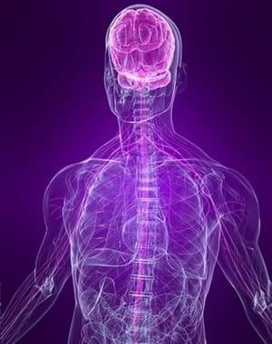 nervnay sistema min 7e926